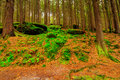 The virgin forest of the fresh green Royalty Free Stock Images