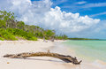 Virgin tropical beach at coco key cayo coco in cuba with dead tree trunk the foreground Stock Images