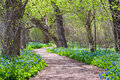 Virginia bluebell potomac heritage trail spring seasonal scenic bluebells bloom in profusion along the in northern during the Stock Images