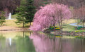 Virginia spring garden cherry blossom landschap Stock Afbeelding