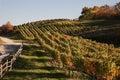 Virginia Wine Country In Autumn