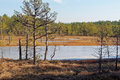 Viru bog frozen pools in lahemaa national park estonia Royalty Free Stock Photo