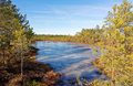 Viru bog frozen pools in lahemaa national park estonia Royalty Free Stock Image