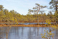 Viru bog frozen pools in lahemaa national park estonia Royalty Free Stock Photo