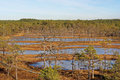 Viru bog frozen pools in lahemaa national park estonia Royalty Free Stock Images