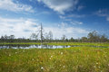 Viru bogs at lahemaa national park famous place in northern estonia with its beautiful landscape Royalty Free Stock Photos