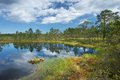 Viru bogs at lahemaa national park famous place in northern estonia with its beautiful landscape Stock Image
