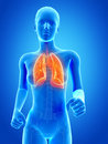 Visible lung jogging woman with Royalty Free Stock Images
