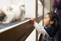 Visiting pet shop little girl decides which little doggy window her turns out s cute little shih tzu Royalty Free Stock Photography
