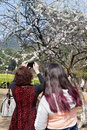 Visitors enjoy plum flower in China Stock Photo