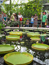 Visitors at lilys house kew gardens water royal botanic london uk Royalty Free Stock Photos