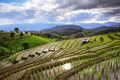Visual arts rice terraces fresh terrace field over the mountain range and beautiful sunset Stock Photo