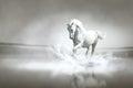 Vit häst som kör till och med vatten Royaltyfri Foto