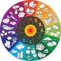 Vitamin wheel vector illustration of groups in colored Royalty Free Stock Photography