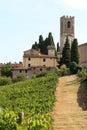 Viticulture in Badia di Passignano, Tuscany, Italy Royalty Free Stock Photo