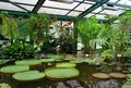 Tropical plants in the Apothecary Garden in Moscow Royalty Free Stock Photo
