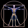 Vitruvian man with bones Royalty Free Stock Images