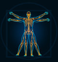 Vitruvian man an illustration of a Stock Images