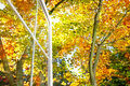 Vivid autumn leaves outside open window Royalty Free Stock Photography