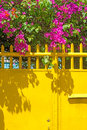 Vivid colors magenta colored bogainvilla vine blossoms overhang a bright yellow metal fence gate in puerto princesa palawan Royalty Free Stock Images