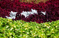 Vivid Flower Bed Stock Images