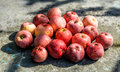 Vivid freshly picked red apples with contrasting shadows on the old metal table warm filtered Royalty Free Stock Photo