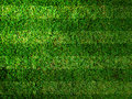 Vivid Green grass Stock Image
