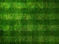 Vivid Green grass Stock Photography