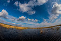 Vivid landscape with colored reed over a lake and blue sky and white clouds Royalty Free Stock Images