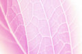 Vivid pastel color leaf soft and blur texture Royalty Free Stock Photo