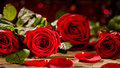 Vivid red rose petals Royalty Free Stock Photo