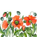 Vivid summer or spring background. Beautiful red poppy flowers on white background. Square shape. Seamless floral pattern.