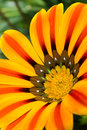 Vivid yellow flower Royalty Free Stock Photo