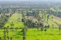 Vogelperspektive von sugar palm trees Stockfotografie