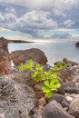 Volcanic ava rock by the ocean hawaii Royalty Free Stock Images