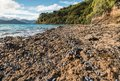 Volcanic beach with blue mussels in New Zealand
