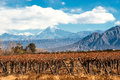 Volcano Aconcagua and Vineyard, Argentine province of Mendoza Royalty Free Stock Photo