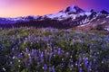 Volcano And Flowers In Stunnin...