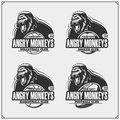 Volleyball, baseball, soccer and football logos and labels. Sport club emblems with gorilla. Royalty Free Stock Photo