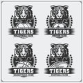 Volleyball, baseball, soccer and football logos and labels. Sport club emblems with tiger. Royalty Free Stock Photo