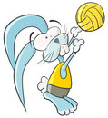 Volleyball bunny Stock Photography