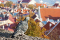 Vue de Tallinn, Estonie Photographie stock