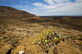 Vulcanic timanfaya spain plant flower rock stone sky hill and summer in los volcanes lanzarote bush Stock Image
