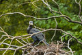 A vulture in a nest Royalty Free Stock Photo