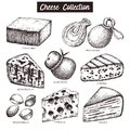 VVector collection of cheese sketches. Hand drawn food illustrations on white background. Vintage ingredients set.