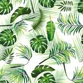 Floral tropical seamless pattern background with exotic flowers, jungle leaves, monstera leaf, orchid, bird of paradise flower bac Royalty Free Stock Photo