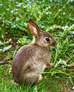 Wabbit Royalty Free Stock Photo