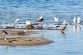 Wader birds on a beach sandy by the sea Stock Image