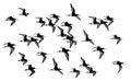 Waders bird monochrome isolated on white background Royalty Free Stock Image