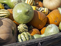 Wagon full of harvested pumpkins and squash Stock Photos